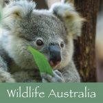Aus Wildlife Book
