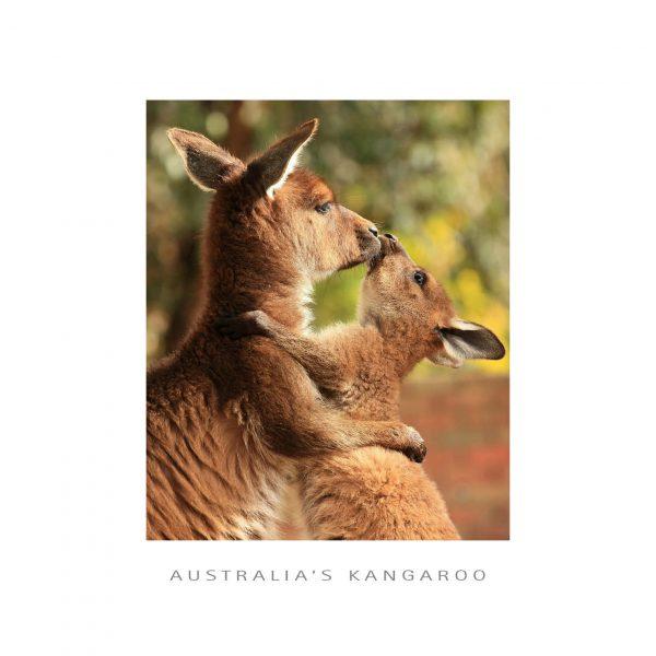 framer postcard