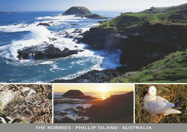 continental postcard